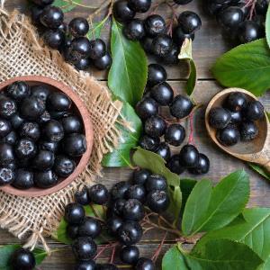 Aronia berries improves vascular function, modulates gut microbiota in men