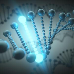 BRCA gene mutations exert no detrimental effect on fertility potential