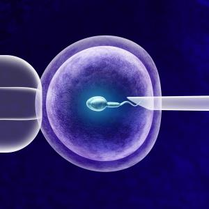 No benefit to endometrial scratching before first-cycle IVF/ICSI