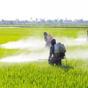 Pesticide chemical ups non-Hodgkin lymphoma risk in Asians