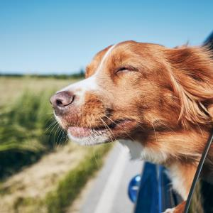 Keeping windows open best for preventing COVID-19 spread in cars