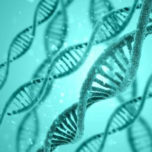 Sex, genetic predisposition synergistic for stroke, MI risks in middle-aged people