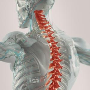Preoperative gabapentinoids reduce postoperative pain in spine surgery