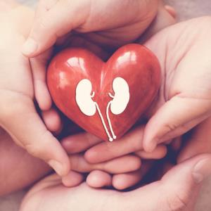 SGLT-2i: Preserving the kidneys and protecting the heart