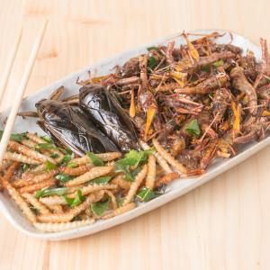 Eating crickets for breakfast may be good for gut