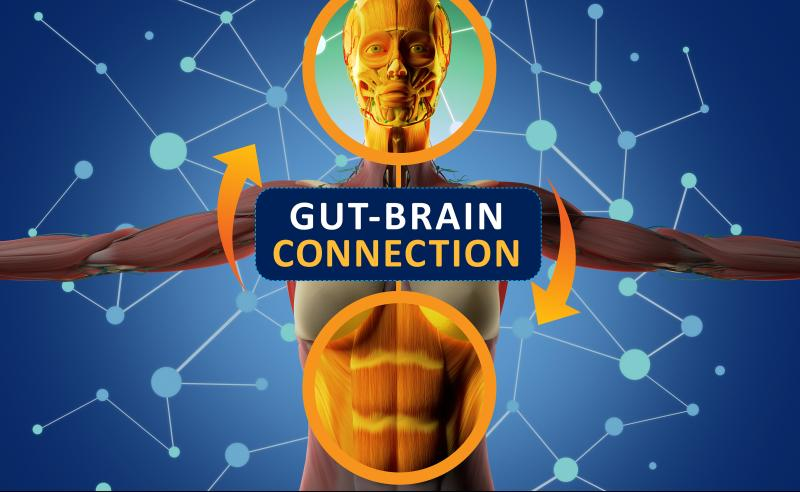 Gut Brain Connection >> New Study Supports Gut Brain Connection In Ad News For Doctor