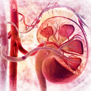 Abatacept may drive earlier, sustained response in lupus nephritis
