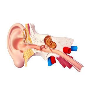 Fibromyalgia patients also show increased sensitivity to mild stimuli