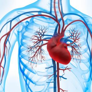 Renal resistive index may predict CV risk in ASCVD patients with preserved EF