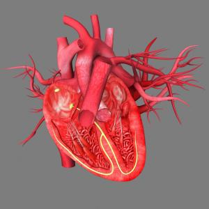 Left atrial remodeling may compensate for changes in cardiac structure, function