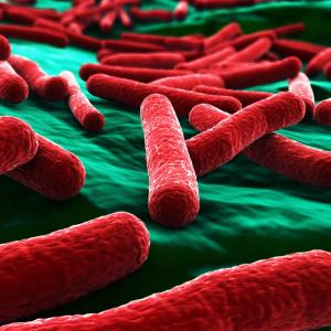 Seven-day antibiotic course as effective as 14-day for gram-negative bacteraemia