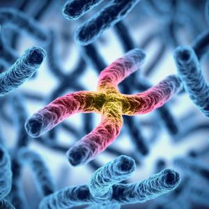 Age, family aggregation, haematological abnormalities predict telomere shortening in IPF patients
